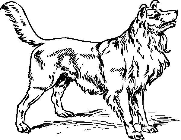 Disegno da colorare cane forte for Disegni da stampare e colorare di cani