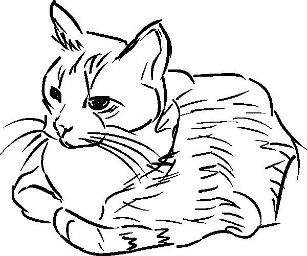 Disegno da colorare gatto che riposa for Disegno gatto facile
