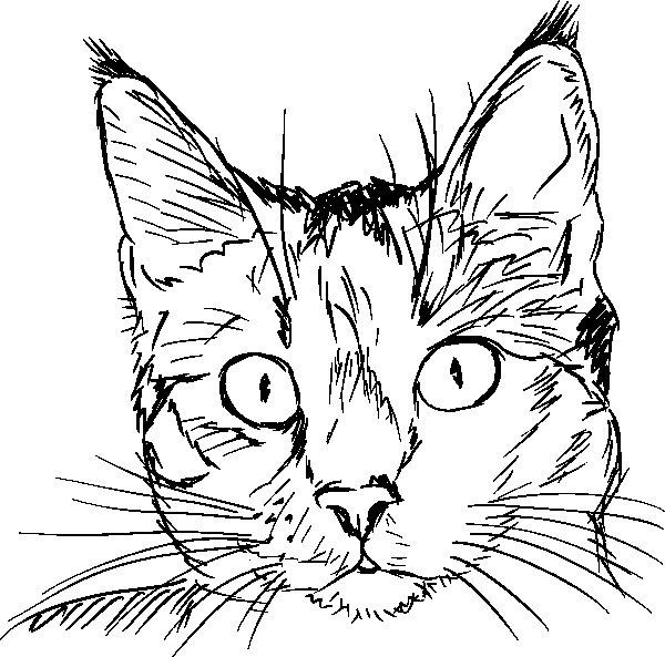 Disegno da colorare testa di gatto for Cani e gatti da stampare e colorare