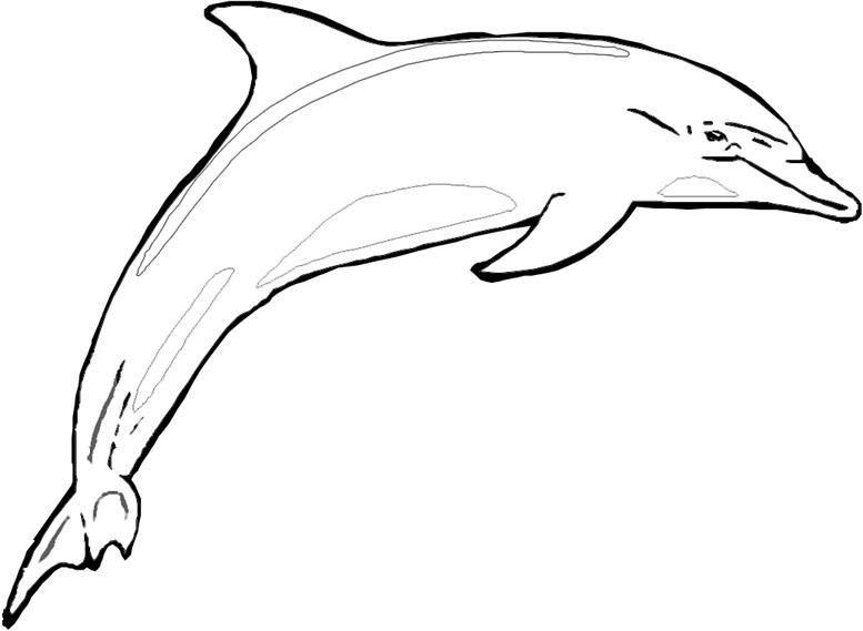 Disegno da colorare delfino for Delfino disegno da colorare