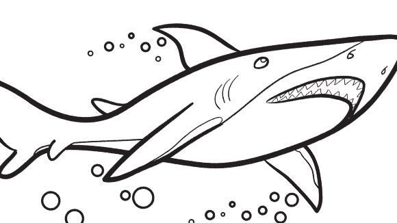 Disegno da colorare squalo for Disegno squalo per bambini